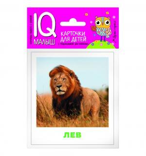 Набор карточек  Животные жарких стран 0+ Айрис-пресс