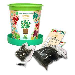 Набор для выращивания  Огурец корнишон в горшке Happy Plant