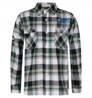 Рубашка , цвет: зеленый/черный Damy-M
