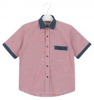 Рубашка , цвет: оранжевый/синий Tsarevich