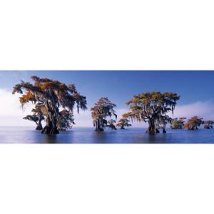 Пазл Heye Затопленные кипарисы, 1000 деталей, панорама