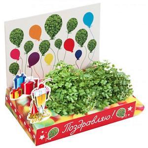 Набор для выращивания  Поздравляю-Поздравляю! Happy Plant
