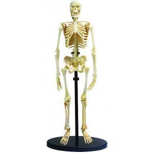 Анатомический набор , 37 деталей Edu-Toys