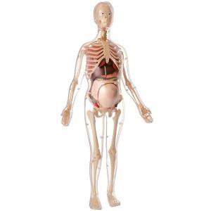 Анатомический набор Edu Toys Беременная женщина, 56 см Edu-Toys